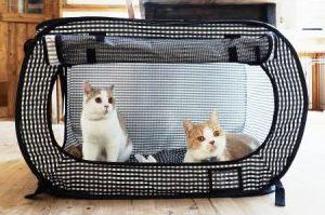 Daftar Harga Kandang Kucing Persia dan Tips Memilih Kandang yang Tepat