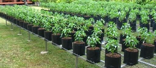 Syarat Media Tanam Cara Bercocok Tanam Sayuran Organik