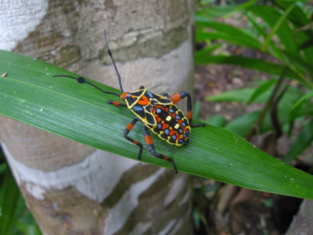 Insectos raros  insectos coloridos raros exoticos de gran
