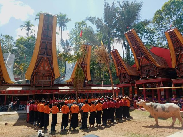 Upacara Adat Suku Toraja Rambu Solo Toraja, Apa Sih itu ?