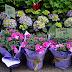 Sunday Flowers #188