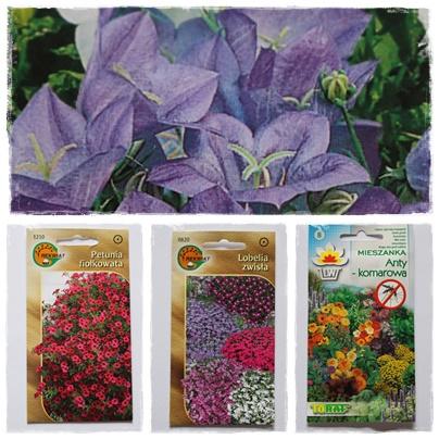 Co siać w marcu? Warzywa i kwiaty z nasion.