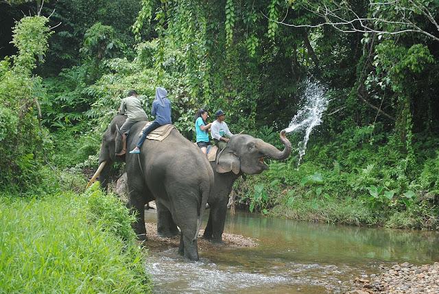 bukit barisan selatan national park rainforest