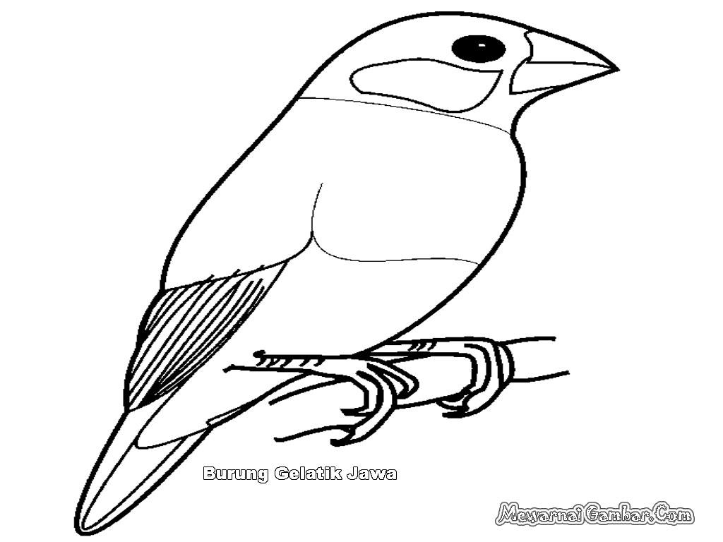 Mewarnai Gambar Burung Gelatik Jawa