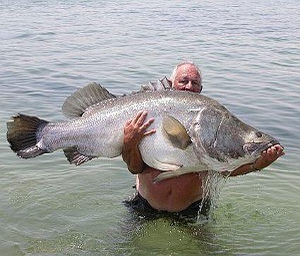 Sonhar com peixe grande