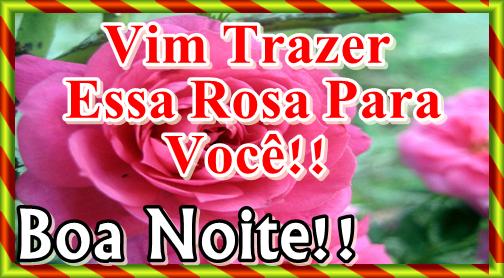 Uma Linda Noite Para Você: Vim Trazer Essa Rosa Para Você! Boa Noite!