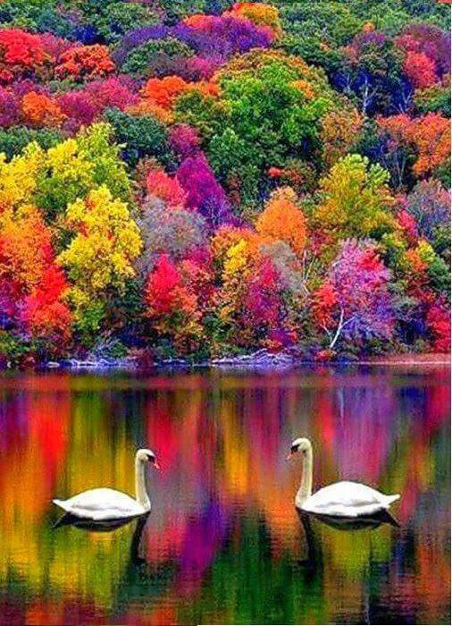 Beauty and Fashion lover Autumn in New Hampshire, USA.