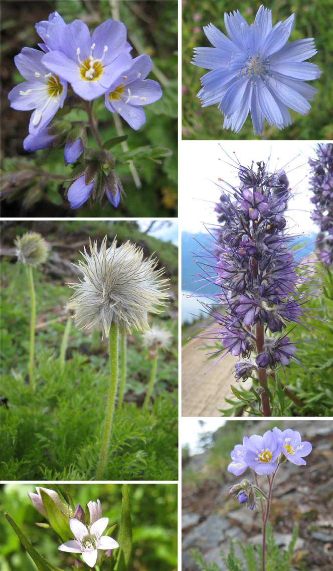 Scanner Near Me >> Jessica Rae Gordon: British Columbia Wildflowers