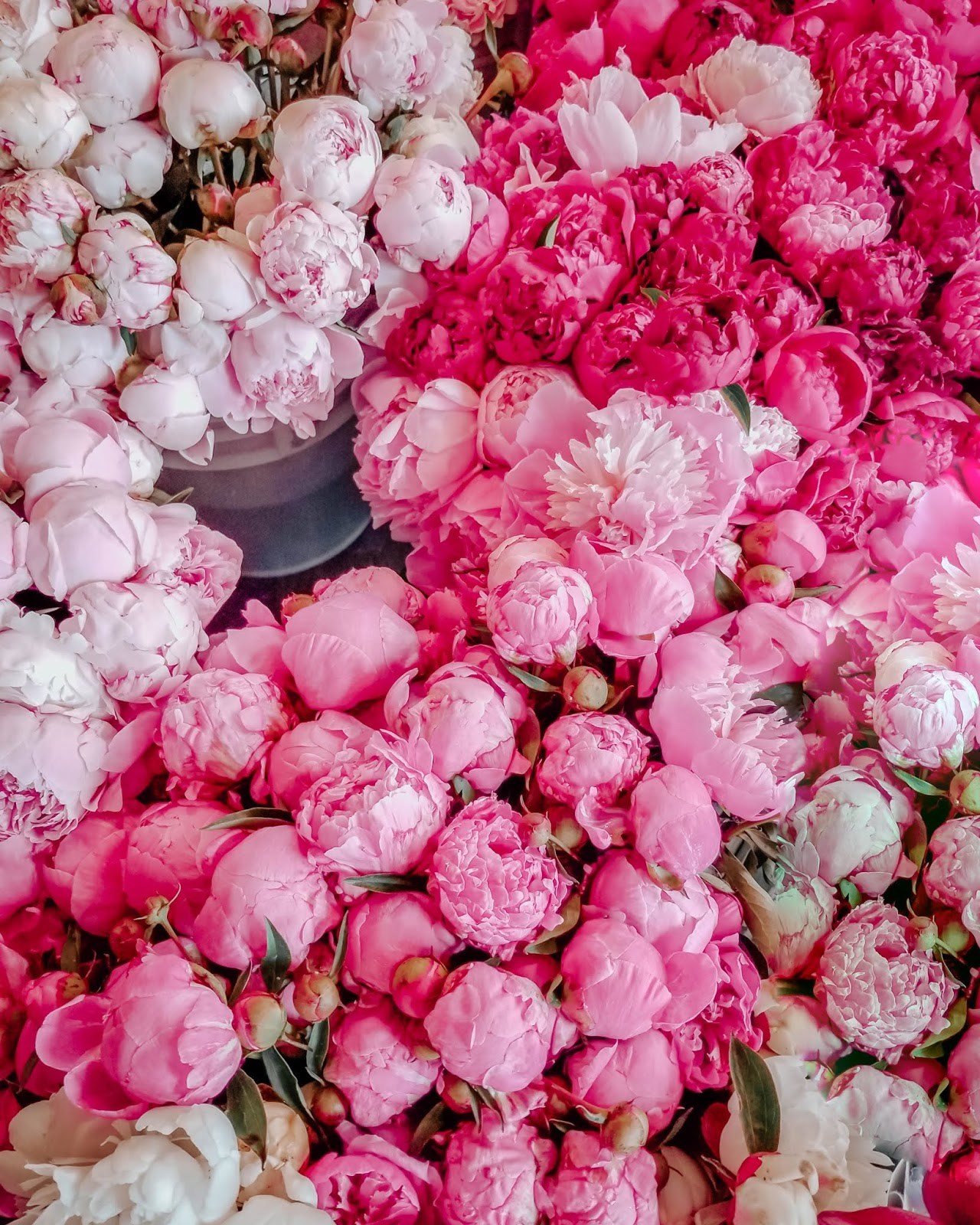 seattle, pike place, travel guide, things to do, travel blogger, travel girl, fashion blogger, peonies