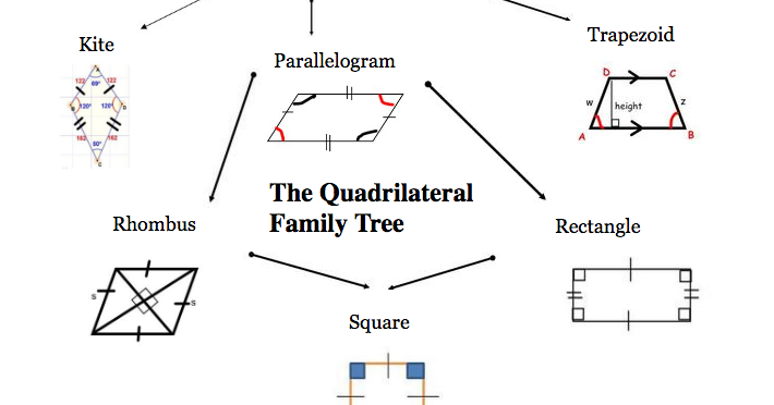 Quadrilateral Diagram Tree 75719 Movieweb