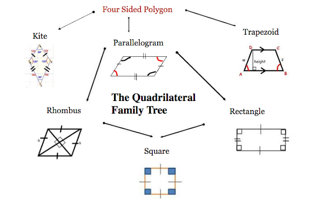 the quadrilateral family