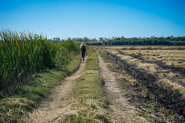 Pelos arrozais da Comporta
