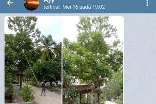 Cara Kirim Gambar Dari Telegram Ke WhatsApp