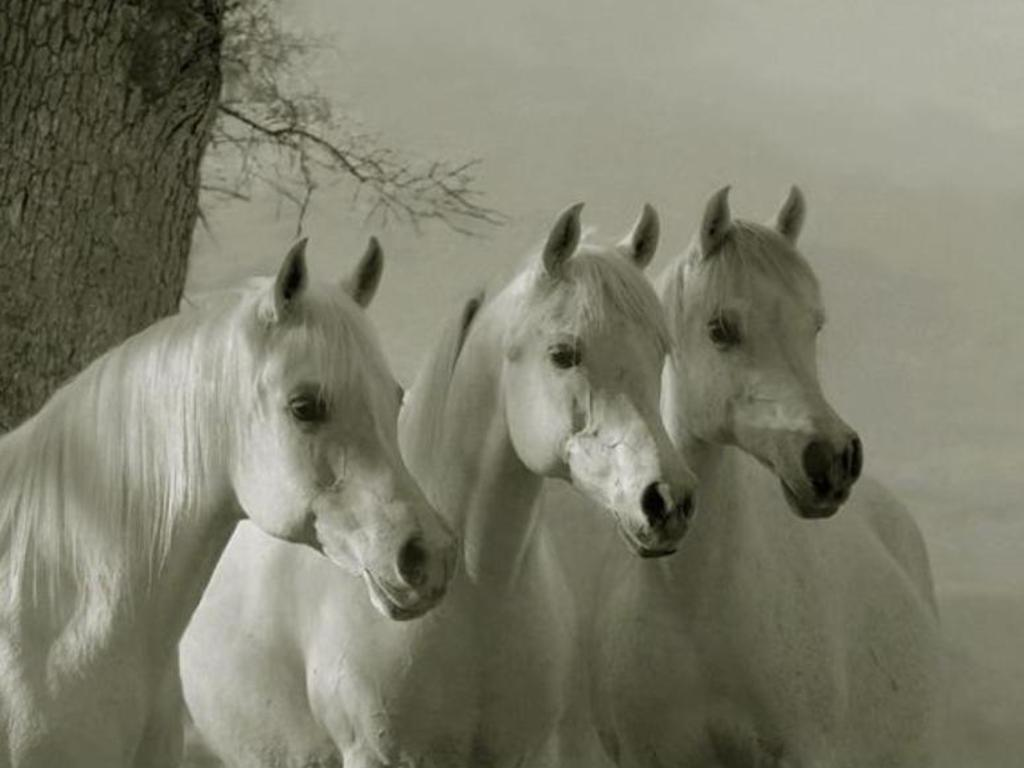 Fototapete Pferde Wallpaper Collections: Amazing Horse Wallpapers