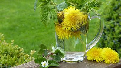 Dandelion, Herbal Plant, Herbal, dandelion root, dandelion benefits, dandelion health benefits, dandelion nutrition facts, dandelion uses,