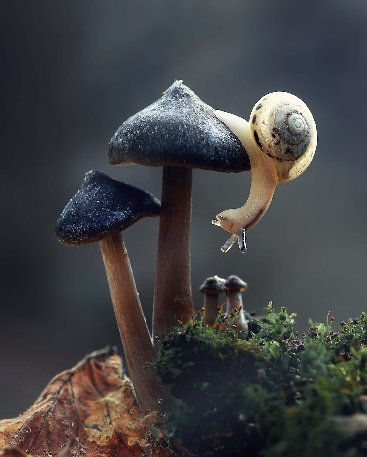 amazing-photo-of-snail-just-loved-it