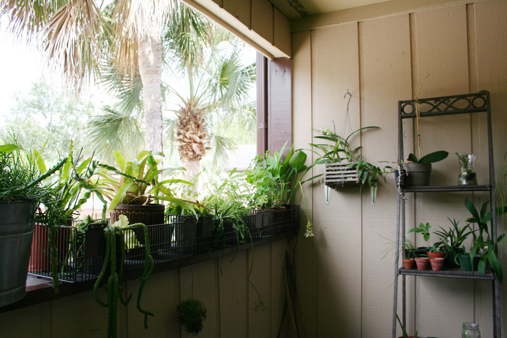 The Rainforest Garden: Repotting Plants on my Balcony