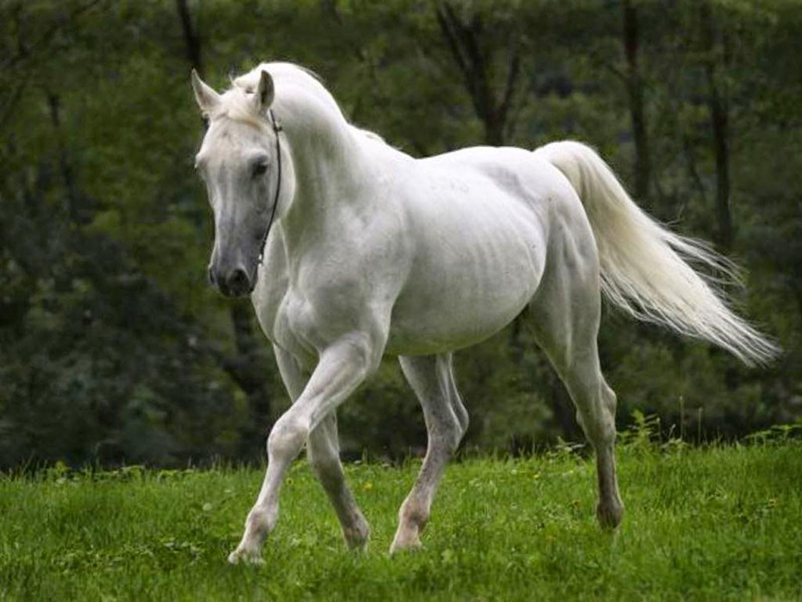 Tag: Horse Wall...