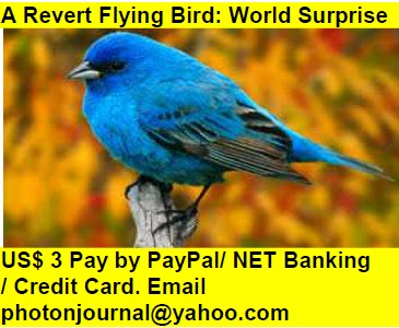 A Revert Flying Bird: World Surprise