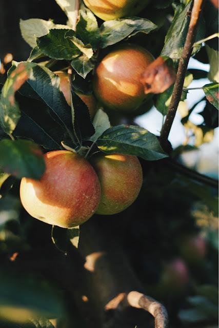 Odżywcze składniki regenerujące skórę po lecie