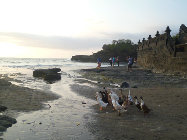 Los patos en la playa