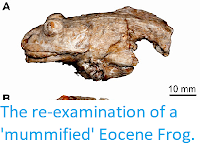 http://sciencythoughts.blogspot.co.uk/2013/10/the-re-examination-of-mummified-eocene.html