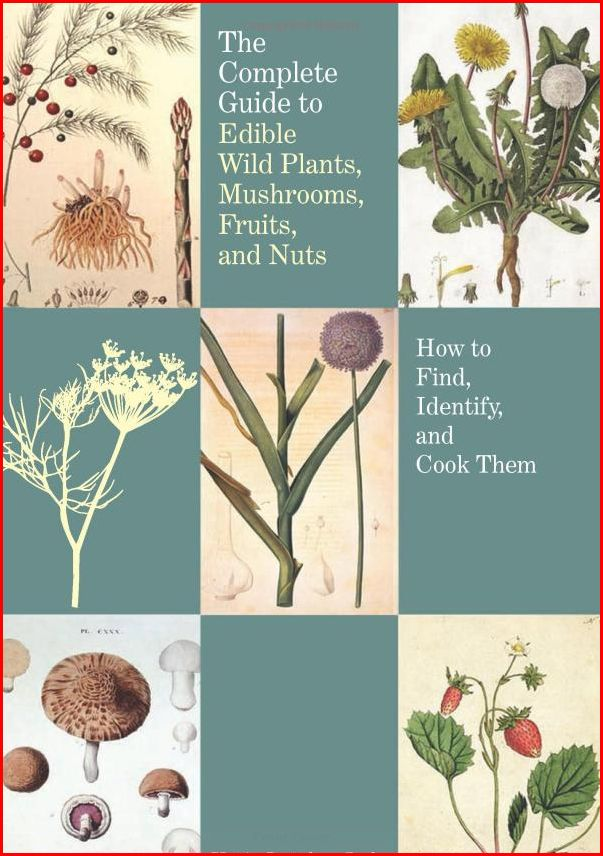Wild And Free Montana On The Bookshelf