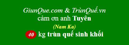 Trùn Quế Nam Ka
