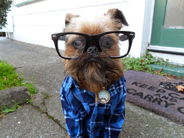 Hipster Dogs Interesting Facts Amp Latest Pictures Funny