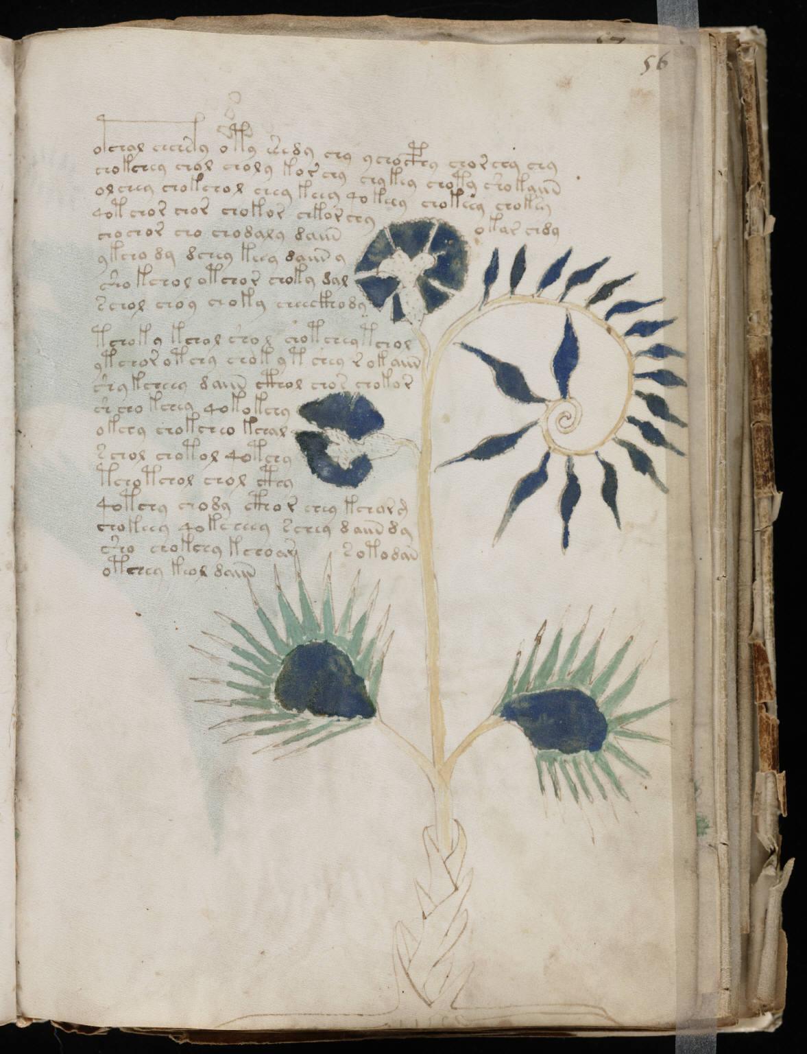 manuscrito109