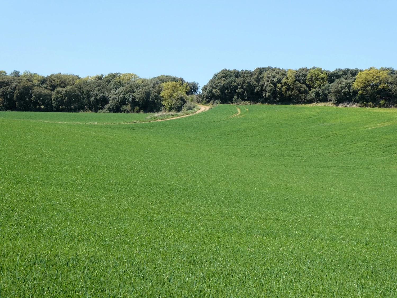 Pla de Montclús