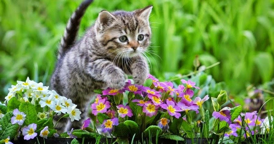 Gambar Kucing Jempol godean.web.id