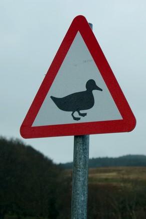 écosse highlands île mull route panneau canard