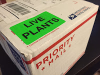live plants priority mail