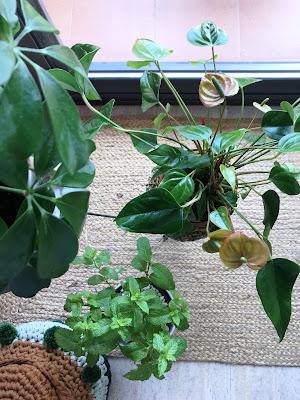 Las plantas le sientan bien a cualquier estilo decorativo.