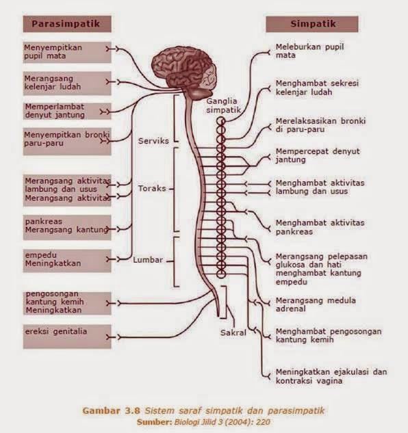 Praktikum Fisiologi Hewan Kelompok 4 3B SISTEM SARAF PADA