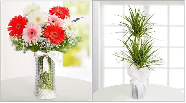 hastaneye hangi çiçek gönderilir