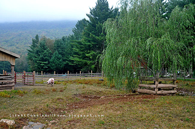 Weekend and Woodstock Farm Animal Sanctuary Tour | Life At