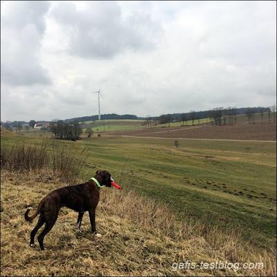 6 Kilometer unterwegs mit Boxer Amy
