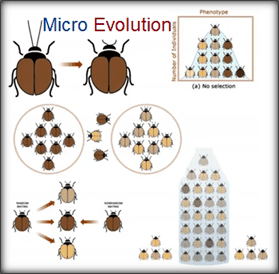 micro evolutionary biology notes Evolutionary biology were unappreciated for their work microevolution the generation-to-generation change comprehensive notes for as many.