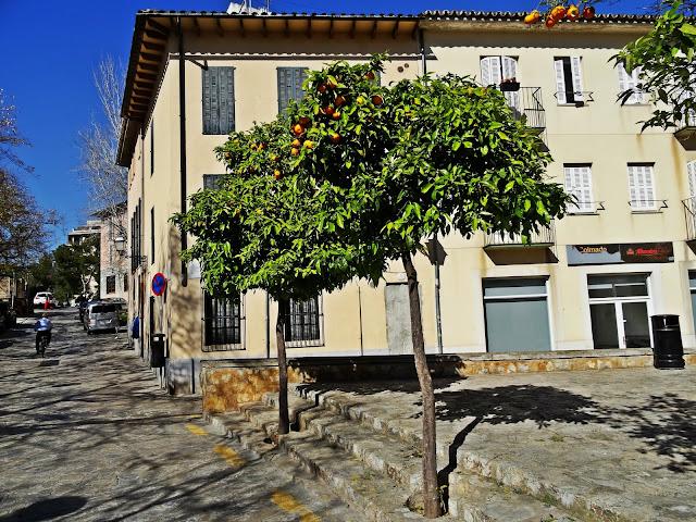 mandarynki na drzewkach Majorka, gdzie zobaczyć?