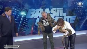 Cobra faz xixi ao vivo na Band e quase acerta Cátia Fonseca