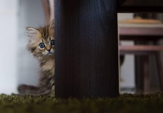Seperti Anak Kucing Yang Menyorok