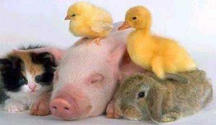 Veganos e os Animais