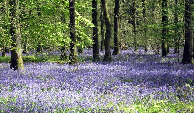 Tina's Allsorts, Micheldever Woods