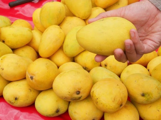 Your Love for Ripe Mangoes May Invite the Threat of Cancer