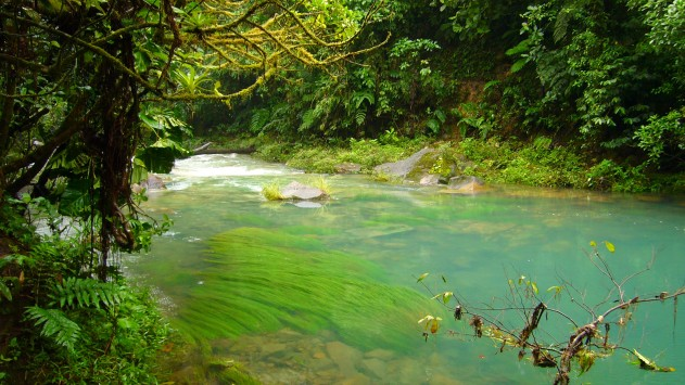 Αυξάνονται τα μέτρα προστασίας για τους αιωνόβιους πλάτανους στον ποταμό Αχέροντα