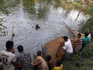 Bangladeshi Fish Photo