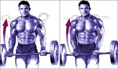 Curl de biceps como ejercicio para aumentar la masa muscular de los brazos