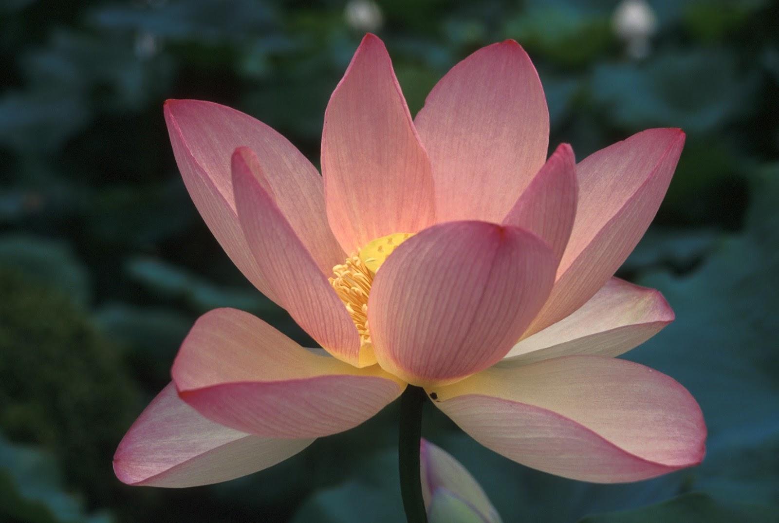 japan navigator japanese floral calendar, Natural flower